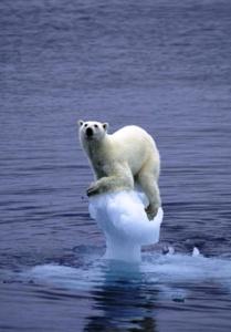 Los efectos del cambio climético